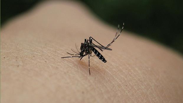 夏天來了!被蚊子叮時不用抹小護士,用「XX」就可以止癢