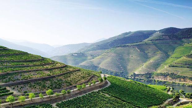 葡萄牙的斗羅地區於2001年被聯合國指定為世界遺產景點,它最負盛名的就是那一片片從斗羅河岸往上延伸的陡峭梯田狀葡萄園。