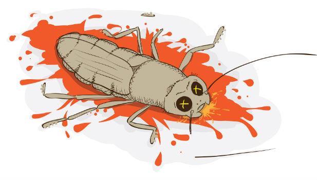 注意!殺死蟑螂後「屍體殘留的液體」一定要擦乾淨,不然......