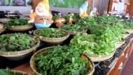 罹患胰臟癌,竟然靠吃「野菜」轉好!她開火鍋店,讓客人吃草吃到飽