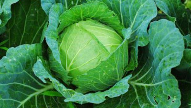 把冬天累積的毒素一次排光!春天到了,就用「5種蔬菜」喚醒冬眠的身體!