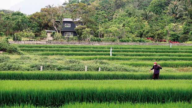 農委會修改法令,讓蓋農舍變困難,過去一地難求的台東縣東河鄉農地,目前傳出交易停擺。