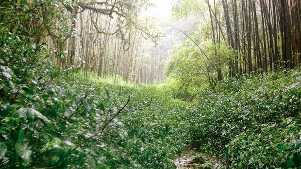 南投縣溪頭忘憂森林