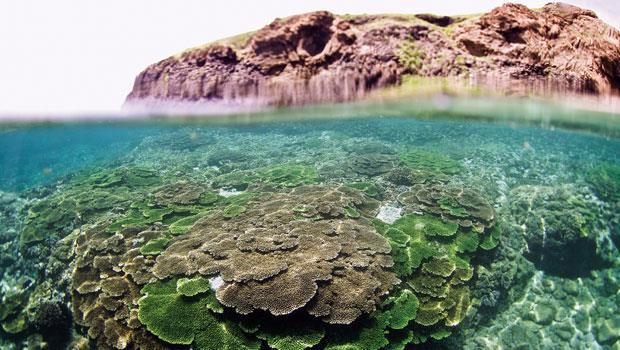 「東吉之眼」的海面下,遍布桌形軸孔珊瑚