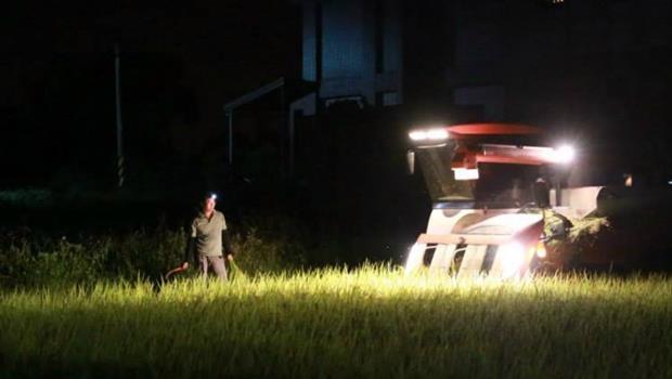 種稻只要打3通電話?除了晶圓之外,直擊台灣最大代工業「水稻代耕」!