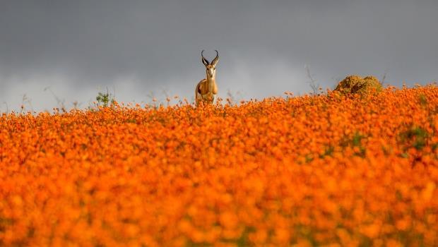 台灣炒房的下場?一個非洲真實場景給了答案:飢荒時,餓得發昏的羚羊會集體奔落懸崖溺斃...