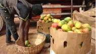 「幾大卡車芒果需在2個月銷完,不然就報廢」從非洲芒果一顆只能賣5元,看台灣農業的強大