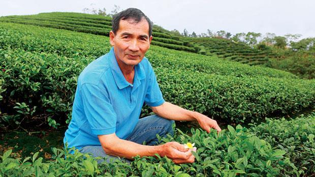翁萬家族在坪林種茶已百年,茶廠雖小,但34 年產量早被盤商包走了。有錢還不見得買得到,「6 月要的話,2 月提早預約啦!」對於天貓,他沒特別厚愛,與歐美顧客皆一視同仁。