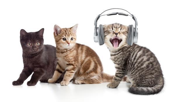 貓咪聽完都醉了!美國管絃樂指揮推出貓咪音樂專輯,逾萬名貓奴推爆Kickstarter