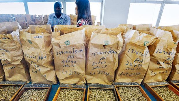 MBA投入農業,一來想解決上游小農薄利困境,二來也因「錢」景佳。