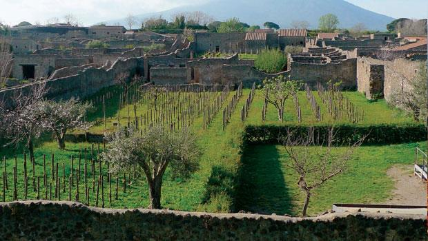 Mastroberardino酒廠參與的考古研究計畫,讓酒廠在以維蘇威火山為背景的龐貝古城裡,研究正宗的「古代」葡萄園。