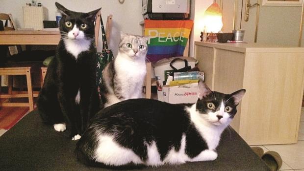 路嘉欣的懺悔告白:養貓之後我才發現,為了認養,70題的「身家調查」一點也不過分