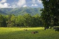 Great Smoky Mountains National Park,課本沒教的美國故事