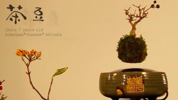 「天空之城」縮小版!日本新辦公室小物,這款盆栽能懸空自轉比招財貓厲害