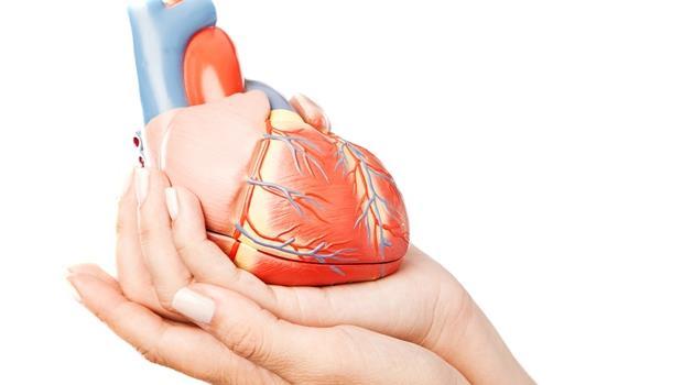 大突破!美國科學家成功用皮膚細胞,培養出活跳跳的心臟