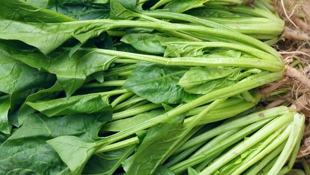 蔬菜之王》春天養肝,吃菠菜最好!護血管抑制癌細胞,1招除苦澀味