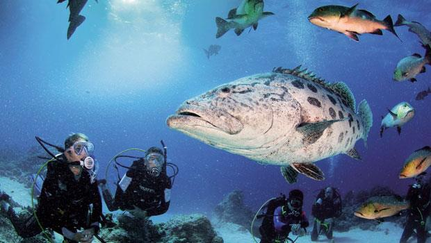 大石斑是此地最大的招牌秀,每一個潛水人都是因為牠的名氣而來,牠也總是攝影師眼中最佳的明星。