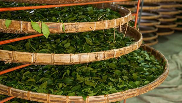 你知道很多台灣茶,快被陸資壟斷了嗎?別以為陸資的逆襲,不關你的事!