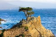北加州最美海岸線17-Mile Drive