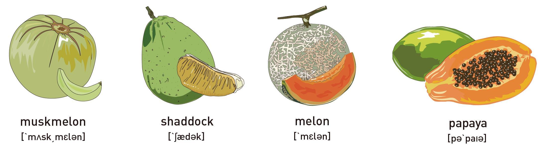 木瓜的英文唸「趴趴呀」是錯的!一張圖讓你搞懂16種水果的英文怎麼說 - 商業周刊