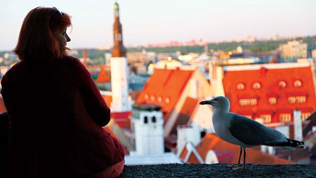 在大半邊界環海的塔林,海鳥也成了當地「居民」,待在觀景平台靠近人類、等待餵食,是另類觀光經濟受益者。