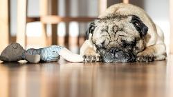碰到困難怎麼辦?先睡飽了再說!心理學專家:成功是「睡」出來的