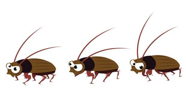 在家看到一隻蟑螂,就可能有一窩蟑螂穴!達人教你3招,用「●●水」讓蟑螂消失不再來