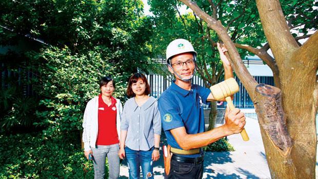 台北市信義、內湖區豪宅到大直國美大真等高價地段,均為樹花園的客戶。