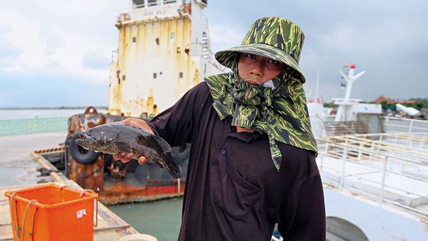 工人手中的青斑,曾是台灣石斑銷陸主力,但今年中國傳出無預警封港,台灣17 艘運搬船幾乎停擺。