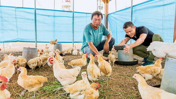 凱馨實業總經理鄧學凱(右)與十甲農場主人蔡一宏(左)攜手合作,以有機穀物並採低密度飼養桂丁雞。