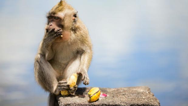 被應徵者嗆「用香蕉,只聘得到猴子」!最傻眼的面試經驗:新鮮人,不是我不給你機會