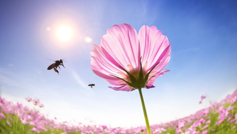 bee's knees是什麼意思?學會這些「昆蟲片語」,讓老外驚豔你的英文能力!