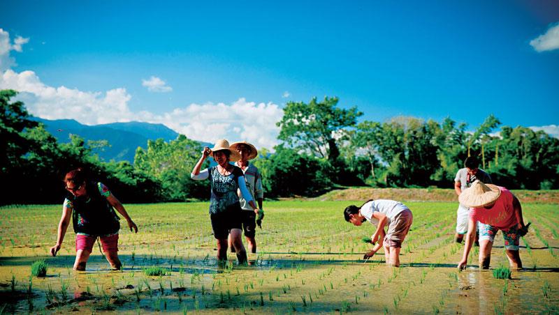 池上的田間下午茶,透過農事參與,讓旅人慢慢找回與土地、生活的記憶與連結。
