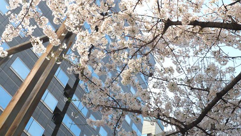 今年賞櫻不用去京都!遊日超過百次達人:到九州玩,別錯過這家「賞櫻絕佳位置」飯店