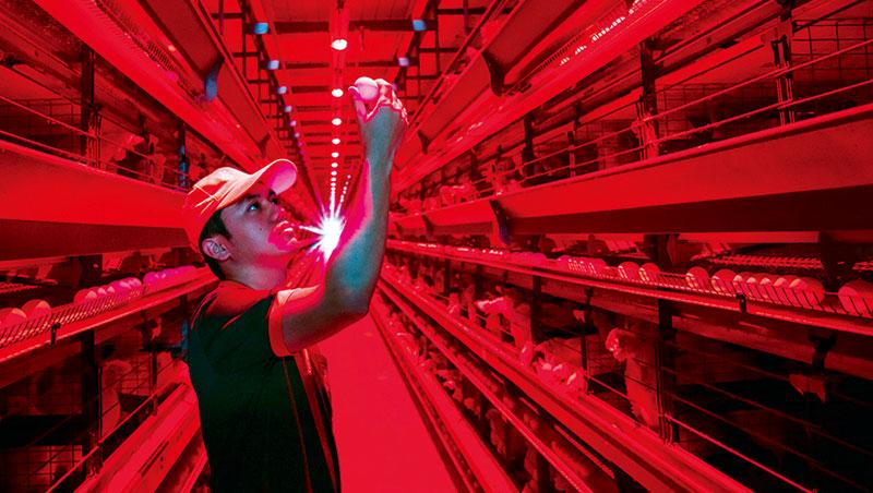 廠房裡播莫札特音樂、用紅色光源讓雞隻情緒穩定不躁動,使產蛋率達95%,比國際同業平均值還高。