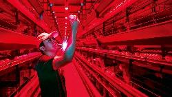 斥資六千萬拚大數據養雞,被同業酸「一顆蛋能賣多貴?」這家養雞場營收年翻3倍