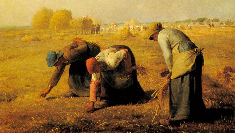 以前家裡養雞養豬,也種過番薯,看米勒畫的農村景象,特別有感覺。 ——王陳彩霞