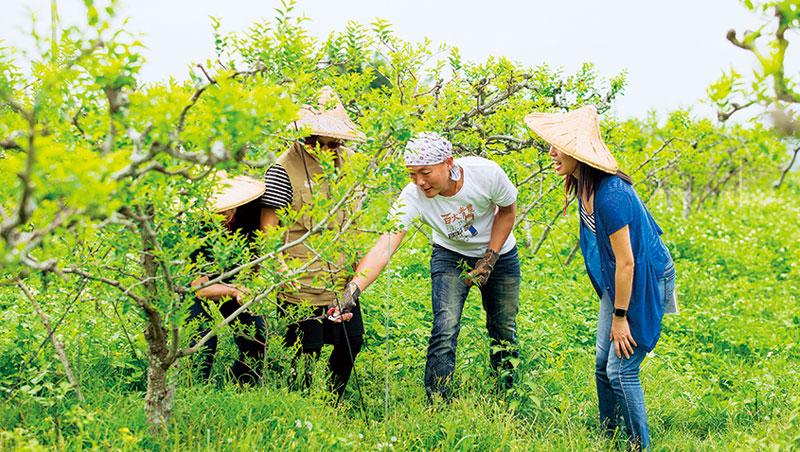 紅棗農邱俊閔承接爸爸退休後買的紅棗田,堅持自然農法不用藥,他說「要跟雜草當好朋友」。