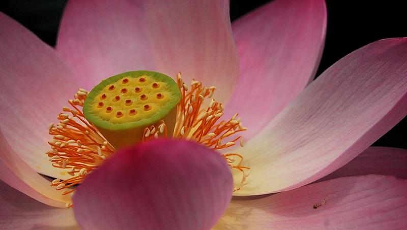 蓮花種子苦熬2000年才開花》亞馬遜第一名作家:種子是人類的老師,強烈而渴望把握只有一次的存在機會