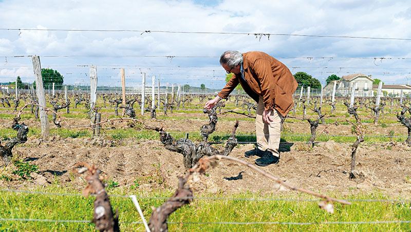 紅酒業是靠天吃飯的產業,從獨立小農到全球連鎖品牌都得因應經濟大環境和市場的挑戰。