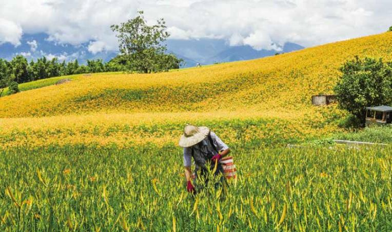 講英文、懂設計》現代知識「型農」杜司偉,把台灣金針賣到一斤6500元的高價檔次