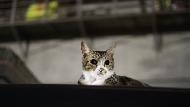 路邊看到可憐的貓狗該怎麼辦?比送收容所好萬倍!你該知道的「中途」這檔事