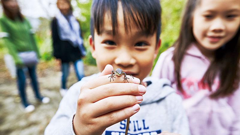 露營不僅是到野外消磨時光,更能讓孩子在大自然中體驗生存法則,-認識生態(圖為台灣草蜥)。
