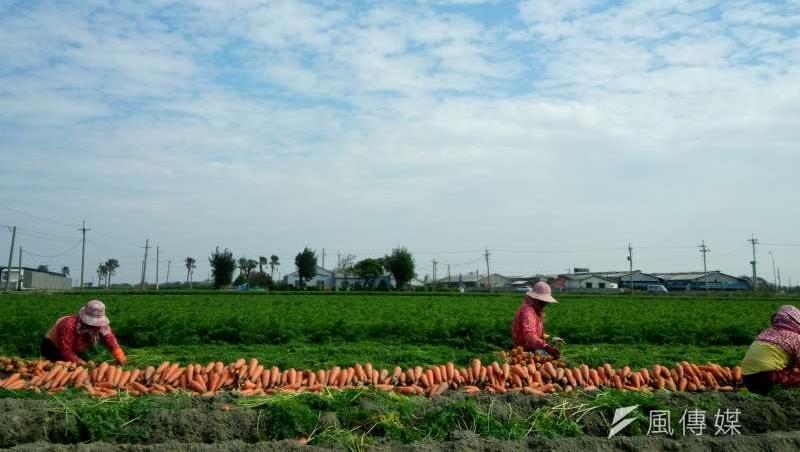 農業縣市不得翻身?「農地農用」每公頃補償僅2.5萬,違建農舍恐難杜絕