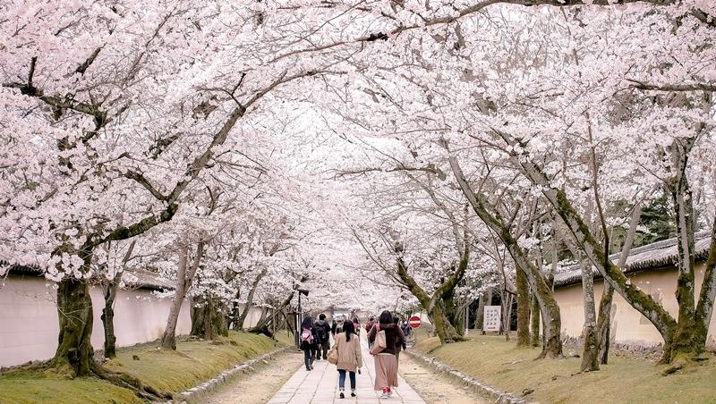 2020訪日外國人目標4千萬人!不只是旅館服務生...去日本賞櫻、血拚外,更該知道的「旅遊商機」