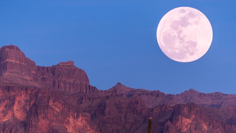 「外國的月亮比較圓」的英文沒有moon...10個和「花草」有關的常見英文俚語