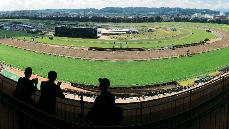 去東京不是只有購物!票價只要台幣55、年輕人也超愛...日本賽馬場必去的4個原因