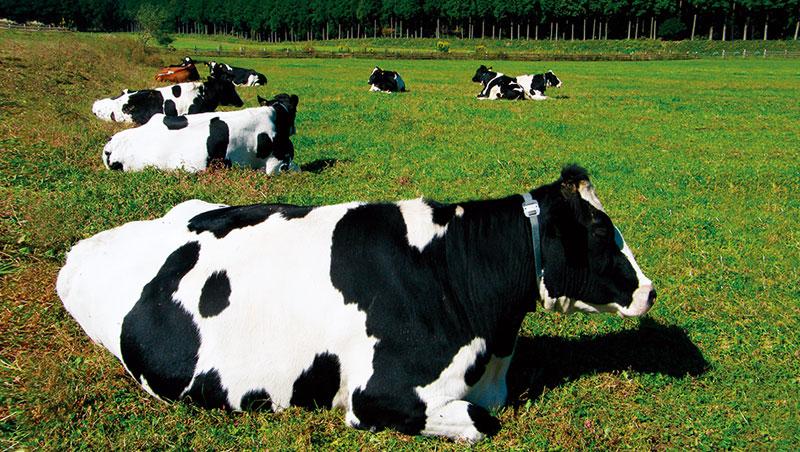 那須高原是日本本州地區最重要的酪農區。