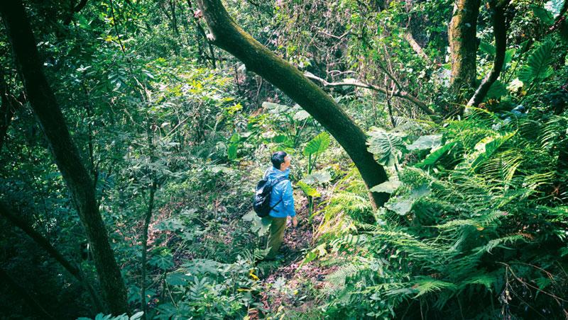 置身在綠意環繞的山林中,能更直接觀察植物原本的樣貌和生長狀態。