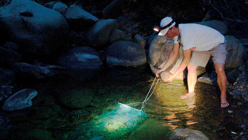 過山蝦會翻山越嶺溯流到溪流最上游,想找到牠們也得利用夜晚深入恆春半島最深處,過程充滿神秘與刺激。